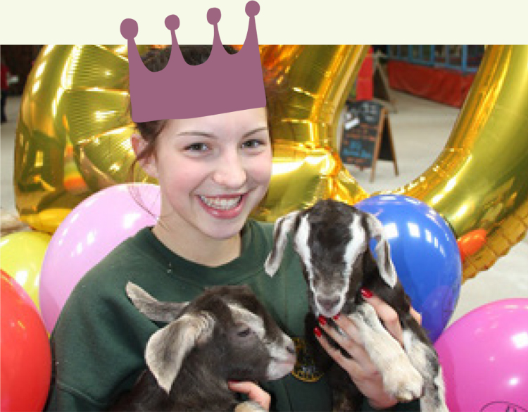 Birthday Goats
